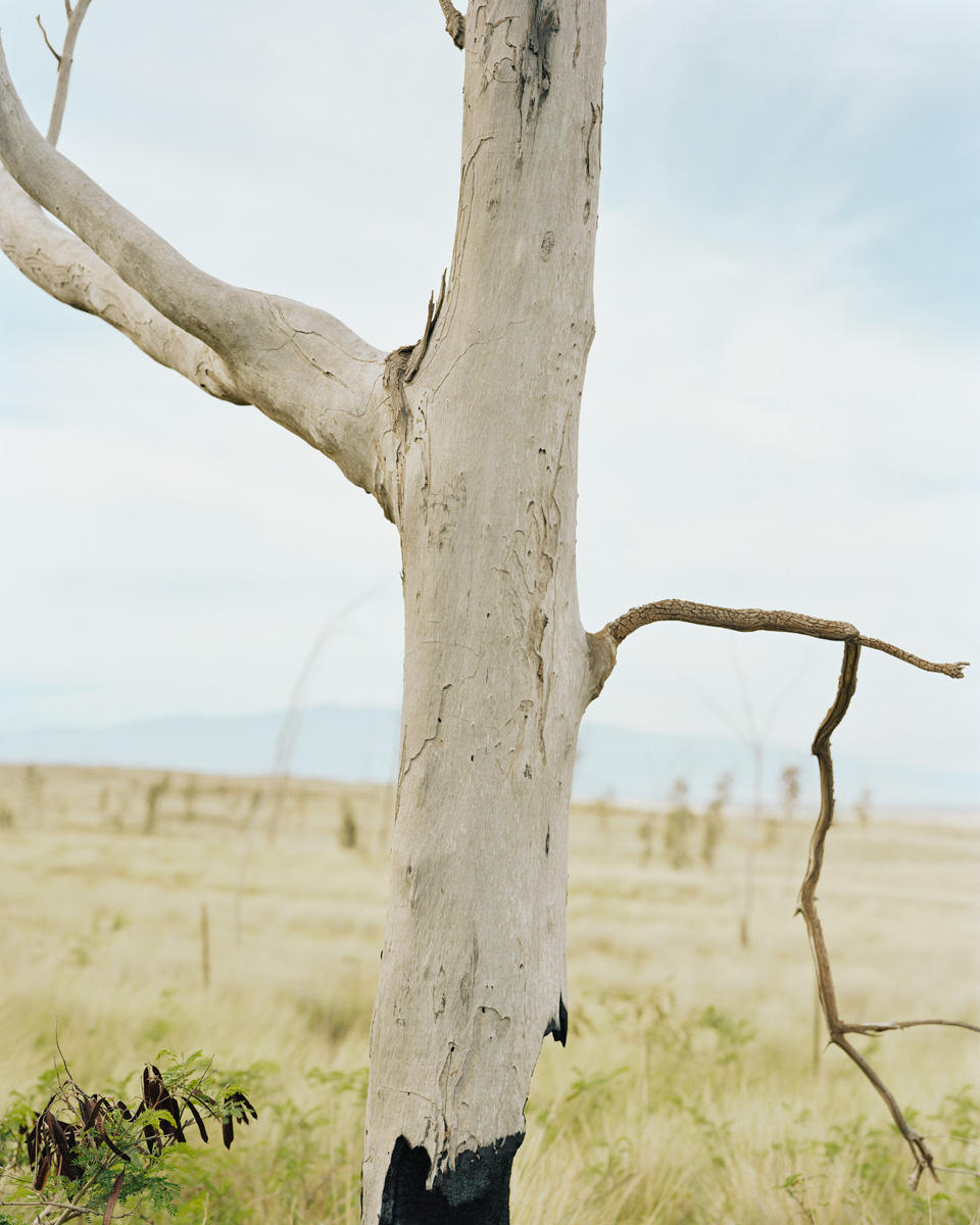 Tree  |  Hawaii  |  Michael Gaillard